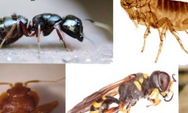 Pest Control Hampton Roads